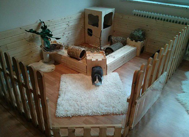 как содержать декоративного кролика