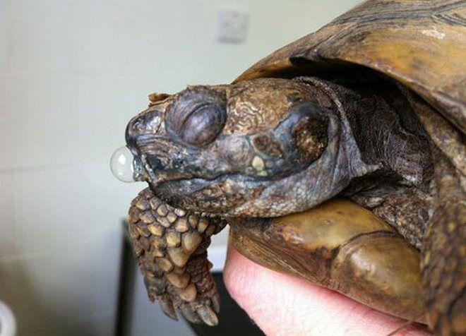 Террариум для сухопутной черепахой в домашних условиях 619