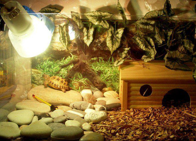 лампа для сухопутной черепахи