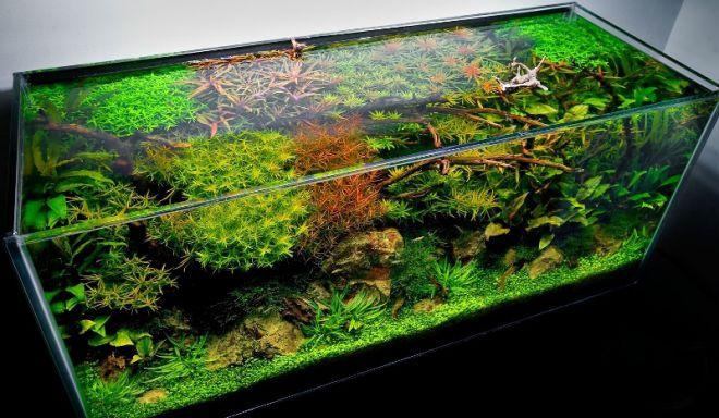 как правильно запустить аквариум