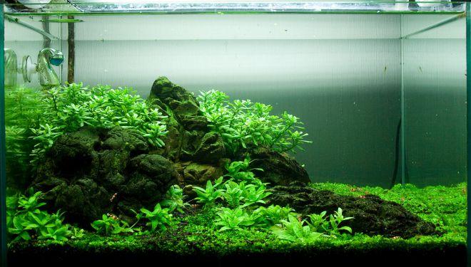 как запустить аквариум травник