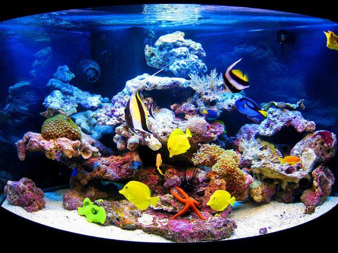 запуск морского аквариума