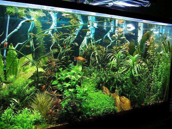 запуск аквариума на питательном грунте