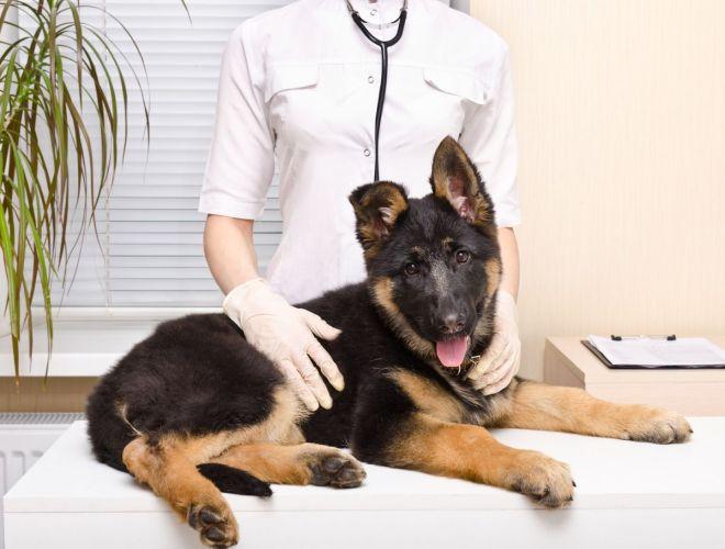 Лечение дисплазии тазобедренных суставов Клиника Доктора Игнатьева
