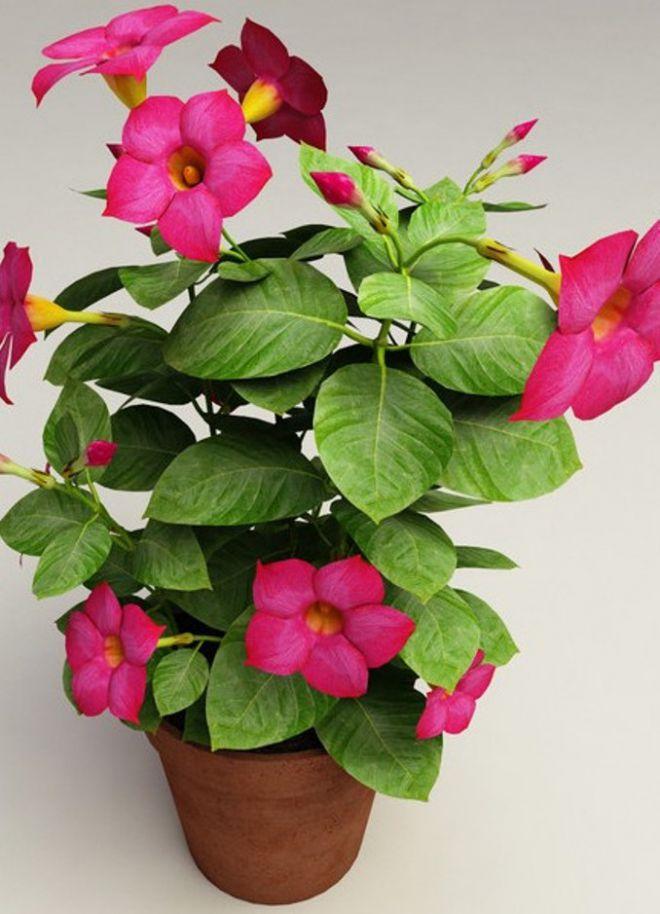 Фото цветущих цветов домашних условиях