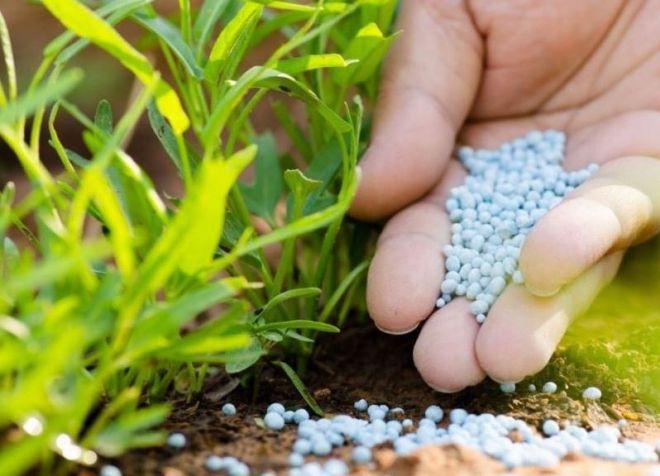 калийное удобрение применение на огороде