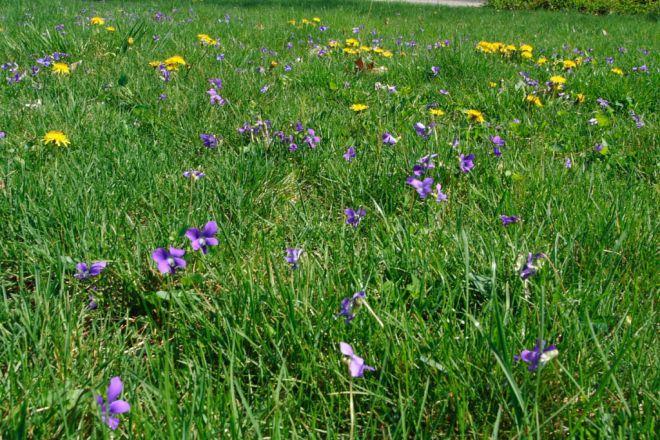 трава для мавританского газона