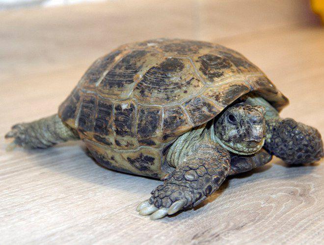 почему не ест сухопутная черепаха