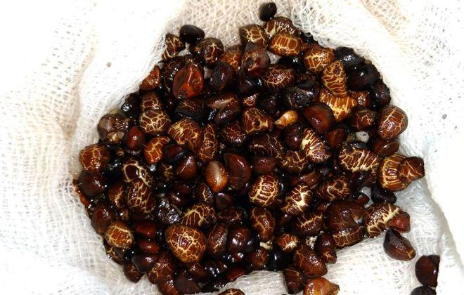 размножение гортензии метельчатой семенами
