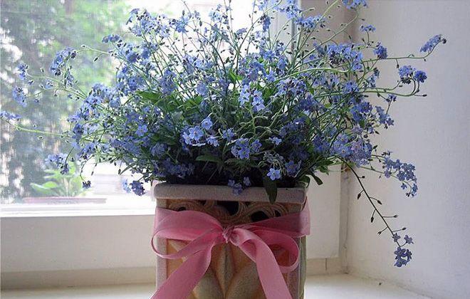 посадка и уход за цветами незабудка