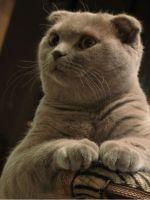 Сухой нос у кошки причины