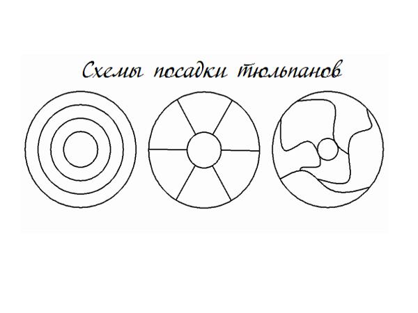 Схема посадки клумбы из тюльпанов