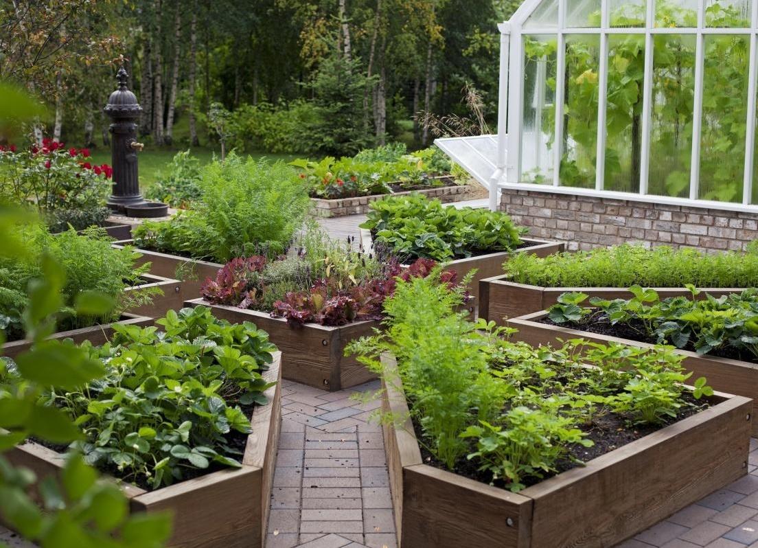 Красивые огороды своими руками фото