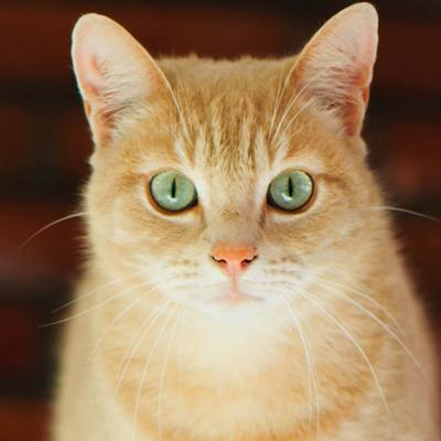 К чему снится выгнать кота фото