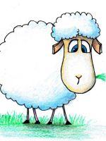 Как нарисовать овечку?