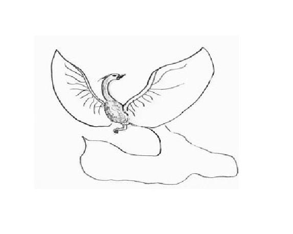Птица счастья рисуем поэтапно