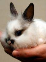 Как приручить кролика к рукам?