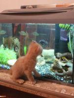 Как склеить аквариум своими руками?