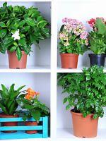 Фуксия из семян в домашних условиях