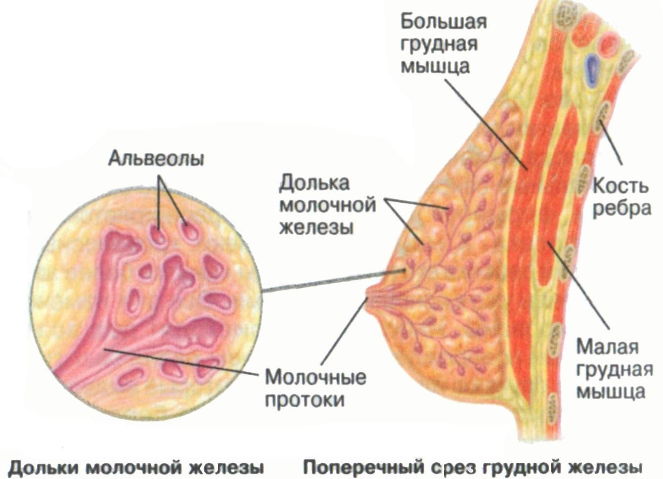 Карцинома фото