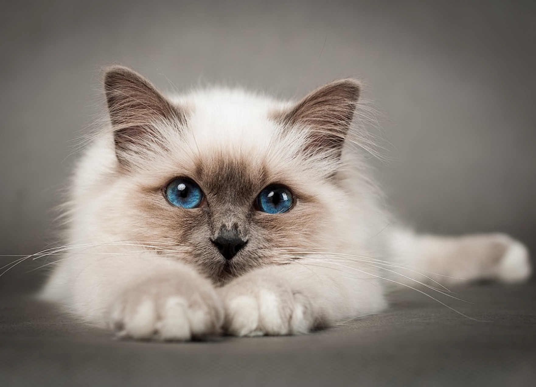 Преднизолон коту доза