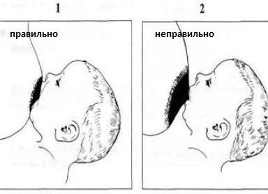 Как дать ребенку грудь