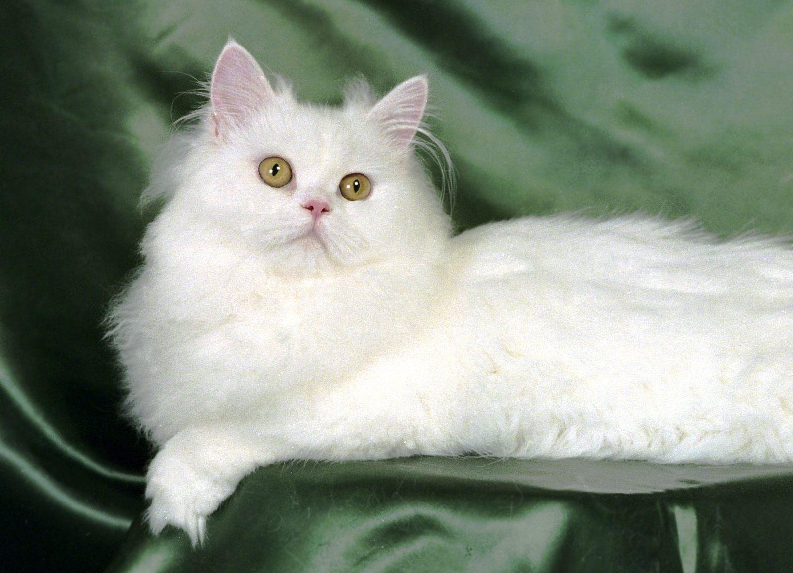 Преднизолон в ампулах котам
