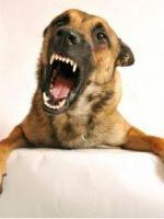 Укус собаки: что делать?