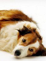 Артрогликан для собак