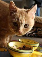 сбалансированное питание кота фото