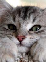 Глисты у кошек – симптомы