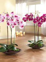 Как обрезать орхидею после цветения?