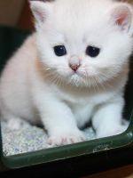 Как отучить кота гадить?