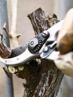 Как правильно обрезать деревья?