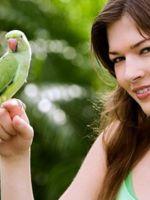 Как приручить попугая к рукам?
