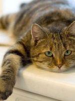Кошка не ест — что делать?