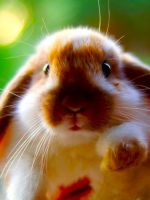 Понос у кролика - что делать?