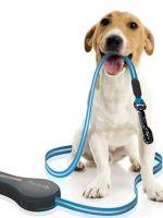 Поводки для собак