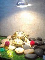Террариум для черепах