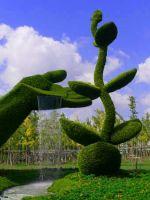 Топиарные сады - удивительные формы