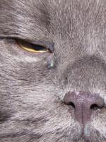 У кошки слезятся глаза