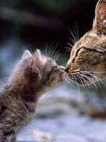Когда можно отдавать котят?