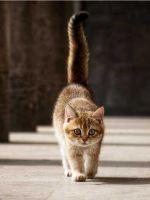 Чем кормить стерилизованную кошку в домашних условиях