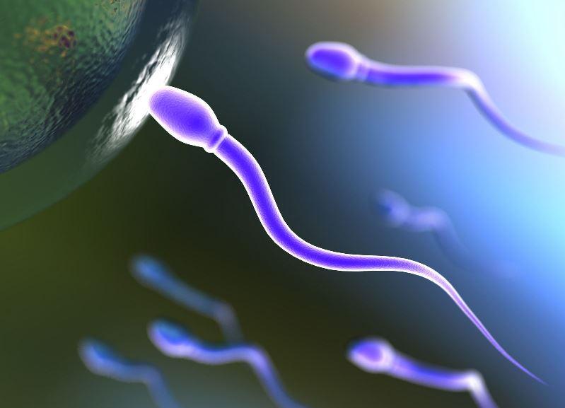 Спермат