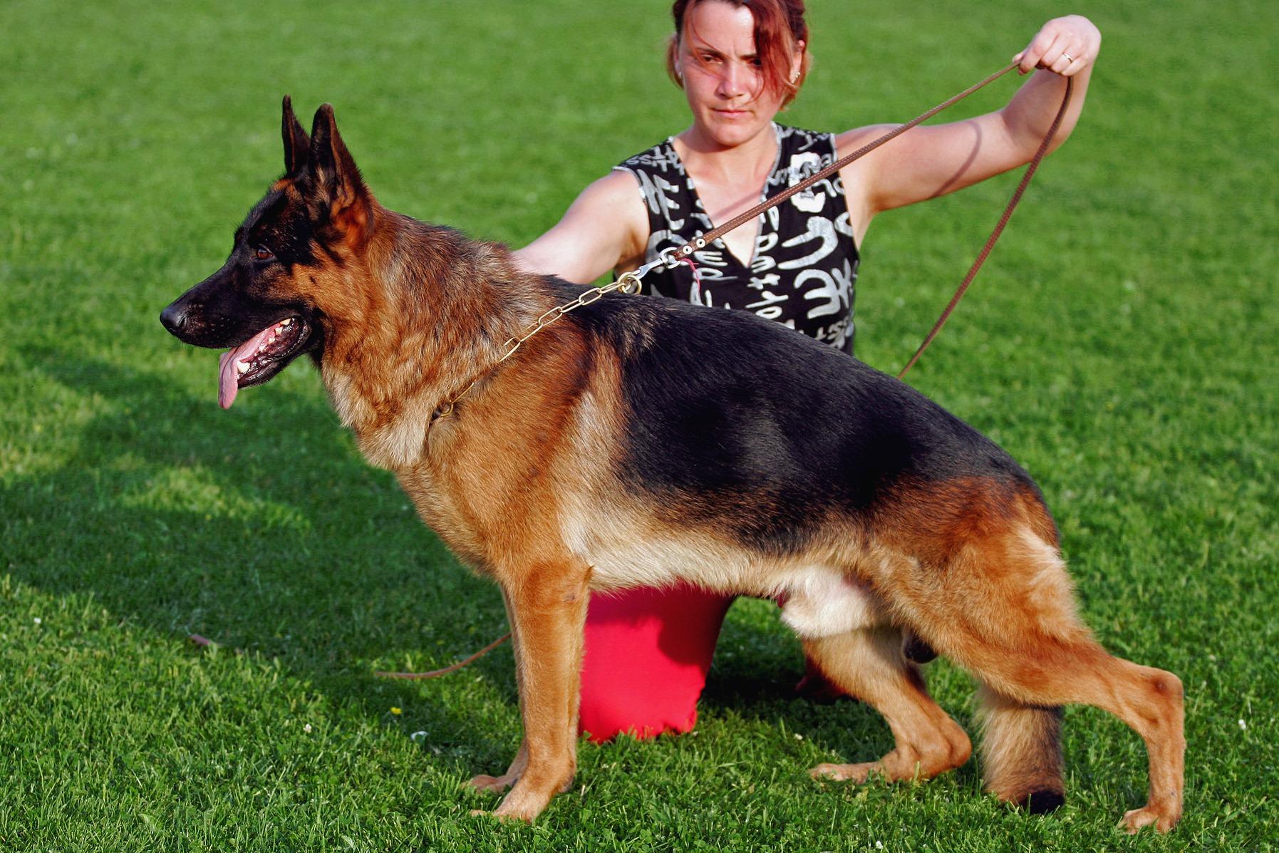 Как научить собаку командам в домашних условиях, каким 20