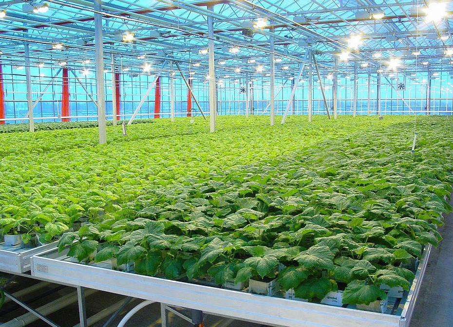 Род теплицы для выращивания овощей плодов и ранней зелени 82