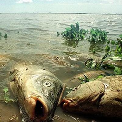 Дохлая рыба во сне беременной 60