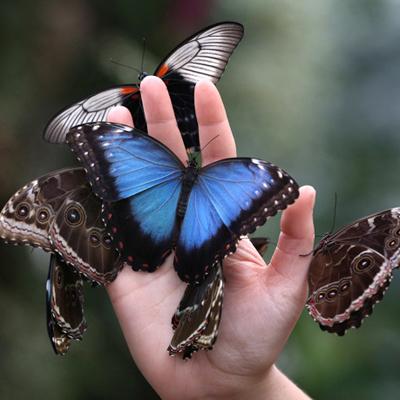 К Чему Снятся Бабочки Черные
