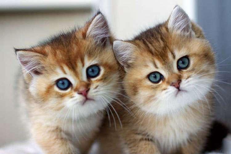 Кошки как распознать кошку с котом