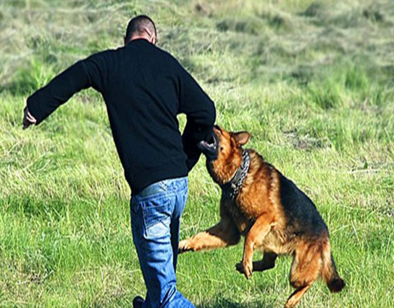 Как сделать щенка чтобы был злой